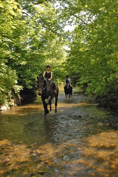 CLE Equestrian Centre 5_399x600